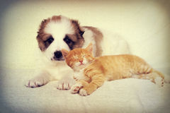 Puppy and kitten instagram Stock Photos