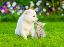 Puppy and kitten kissing on the green lawn.  Royalty Free Stock Photo