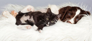 Puppy and Kitten Laying on Furry Blanket Stock Photography
