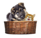 Puppy and kitten looking Royalty Free Stock Image