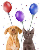 Puppy and kitten looking up at party favors Royalty Free Stock Photos