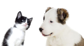 Puppy and kitten looking Royalty Free Stock Photo