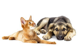 Puppy and kitten looking Royalty Free Stock Photos