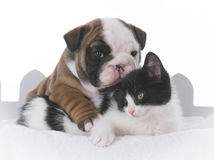 Puppy and kitten love Stock Image