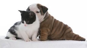 Puppy and kitten love Stock Images