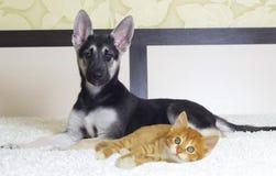 Puppy and kitten lying Stock Photo