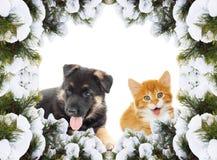 Puppy and kitten Stock Photos