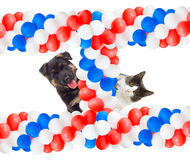 Puppy and kitten peeking Royalty Free Stock Photo