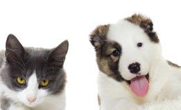 Puppy and kitten peering Stock Photo