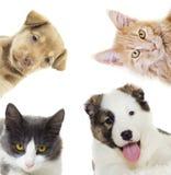 Puppy and kitten peering Stock Photos