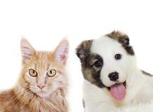 Puppy and kitten peering Stock Image