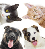 Puppy and kitten peering Stock Photography