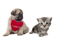 Puppy and kitten. Stock Image