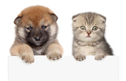 Puppy and kitten show paws above white banner. Isolated Stock Images