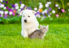 Puppy and kitten sitting on green grass Royalty Free Stock Photos