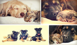 Puppy and kitten. Sleep together stock image