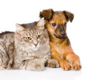 Puppy and kitten together. isolated on white background Royalty Free Stock Images