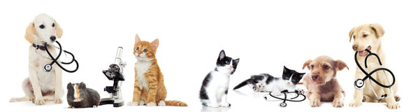 Puppy and kitten. Vet on a white background Stock Photo