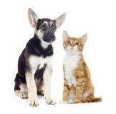 Puppy and kitten watching Stock Photo