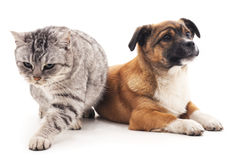 Puppy and kitten. royalty free stock photography