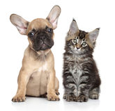 Puppy and kitten on white background Royalty Free Stock Photography