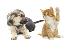 Puppy and kitten Royalty Free Stock Photography