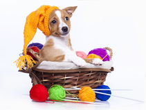 Puppy in a knitted cap. And a ball of yarn Stock Photo