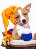 Puppy in a knitted cap. And a ball of yarn Stock Photography