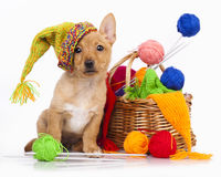 Puppy in a knitted cap. And a ball of yarn Royalty Free Stock Photography