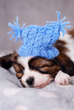Puppy in a knitted hat Stock Photo