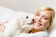 Puppy of labrador licking the face of woman Royalty Free Stock Images