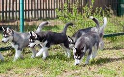 Puppy langs de omheining in werking die worden gesteld die Stock Foto
