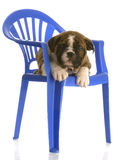 Puppy laying on chair Stock Photos