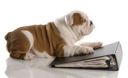 Puppy laying on notebook Stock Photos