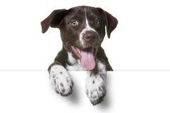 Puppy Leeg Wit Teken royalty-vrije stock fotografie