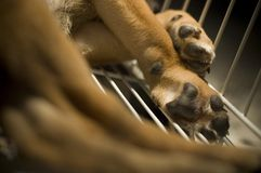 Puppy Leg In Cage. Closeup of a puppy leg a cage Stock Photo