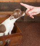 Puppy lessons Stock Image