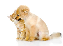 The puppy licks a cat. Isolated on white background stock images