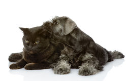 Puppy licks a cat. royalty free stock photos