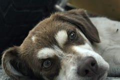 Puppy. Little cute Puppy, in greece stock photo