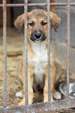 Puppy locked in the cage. Puppy in a chage at the animal shelter waiting to be adopted royalty free stock images