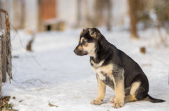 Puppy looking out for mom`s returning from hunting Stock Photos