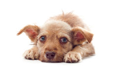 Puppy looking. Stylization of children's drawings stock photo