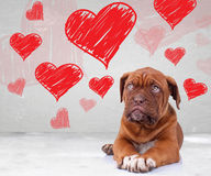 Puppy looking up to heart shapes for valentine's day Royalty Free Stock Photo