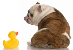 Free Puppy Love Royalty Free Stock Image - 10157106