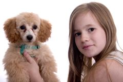 Puppy Love. Girl holding an adorable poodle puppy. Both looking at the camera. Isolated on white royalty free stock photos