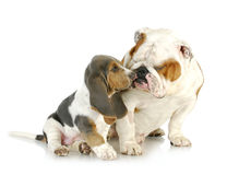 Puppy love Stock Images