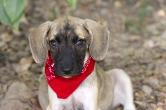 Puppy Love Closeup Isolated Stock Photography