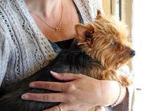 Puppy love cuddles Stock Photos