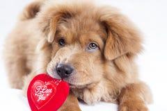 Puppy Love Stock Image